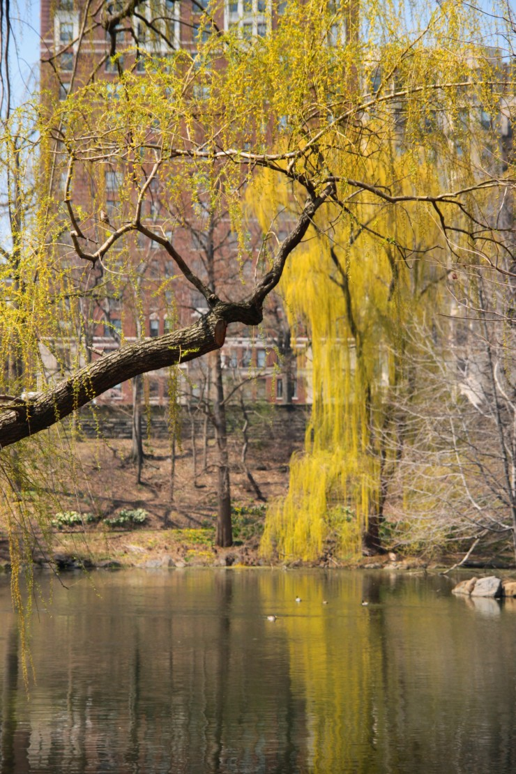 0018_central park tree reflection - IMG_6346